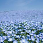 ひよっこ|谷田部家の切り札は花!みね子を仕送りから解放