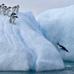 あさが来た|五代友厚があさをファーストペンギンと言った意味は何?